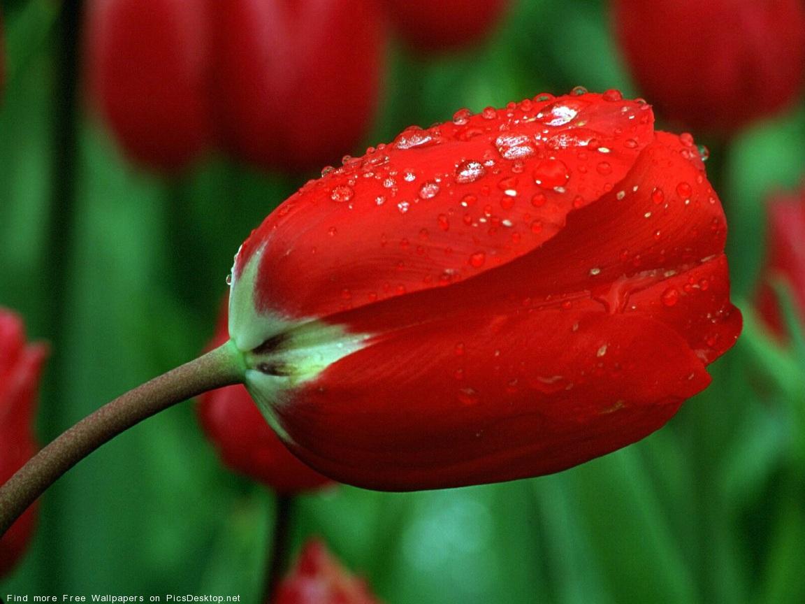 http://picsdesktop.net/Blossoms/1152x864/PicsDesktop.net_78.jpg