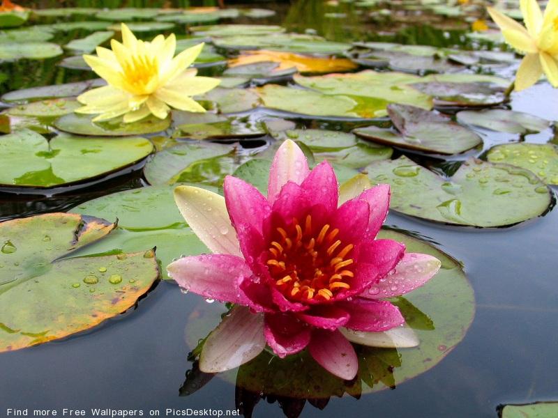 http://picsdesktop.net/Blossoms/800x600/PicsDesktop.net_235.jpg