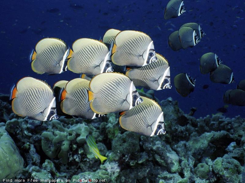 На глубине! Подводный мир!