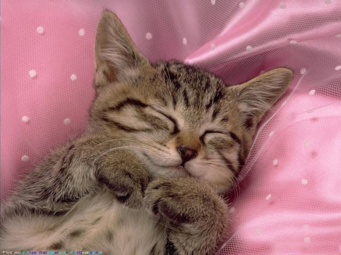 Милый спящий котенок на фото, картинки котенок.