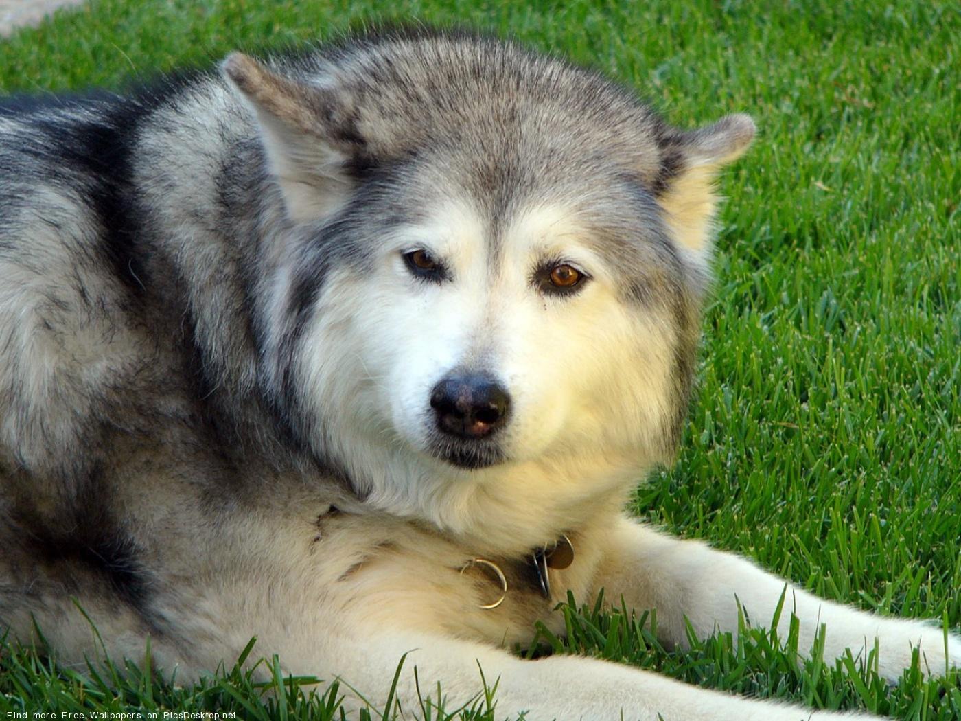 Самые страшные собаки - Фотографии собачек - Фотографии лучших собачек