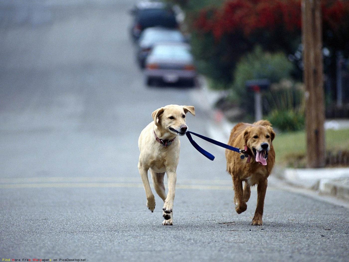 смотреть фото няшных собак #6