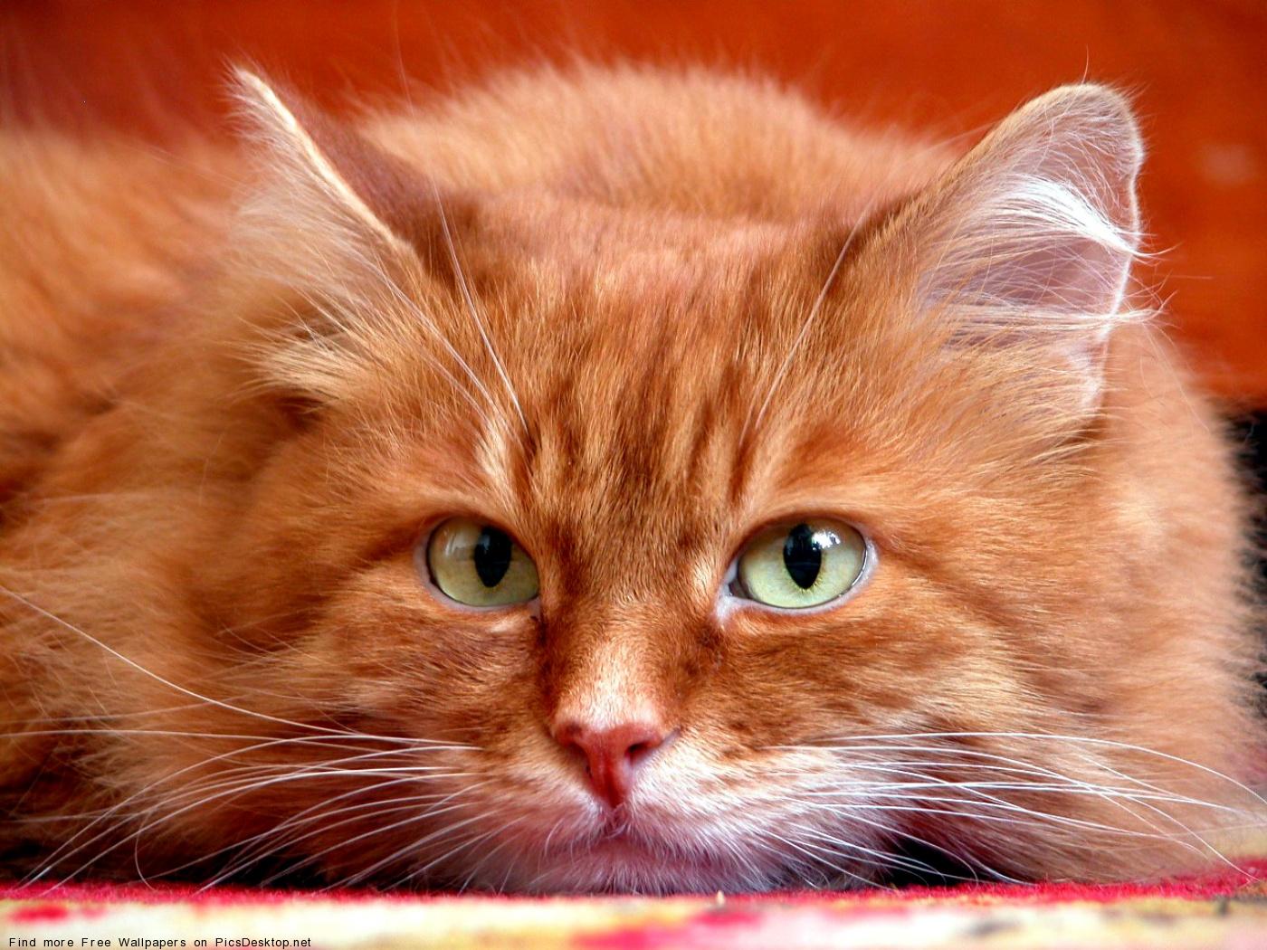http://picsdesktop.net/Pets/1400x1050/PicsDesktop.net_88.jpg
