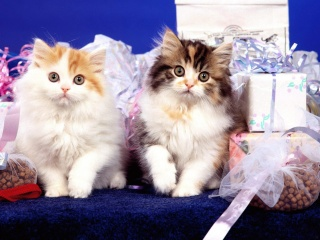 Картинки с котятами - Страница 3 PicsDesktop.net_250