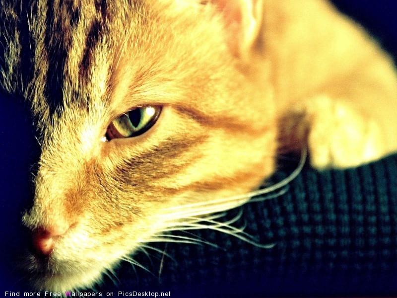 http://picsdesktop.net/Pets/800x600/PicsDesktop.net_125.jpg