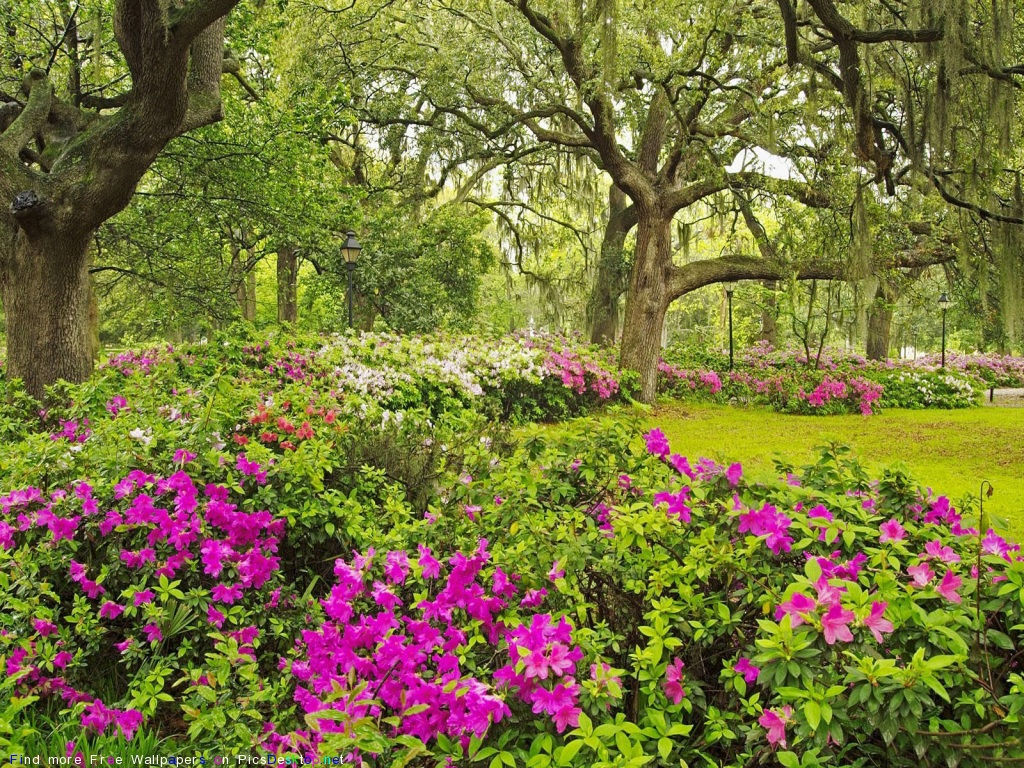 Весна весна весне дорогу