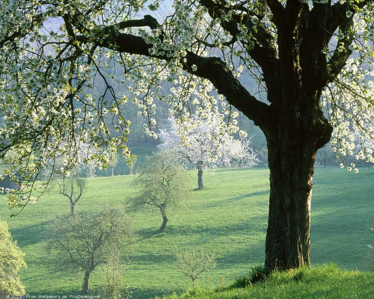 http://picsdesktop.net/Springtime/1280x1024/PicsDesktop.net_105.jpg