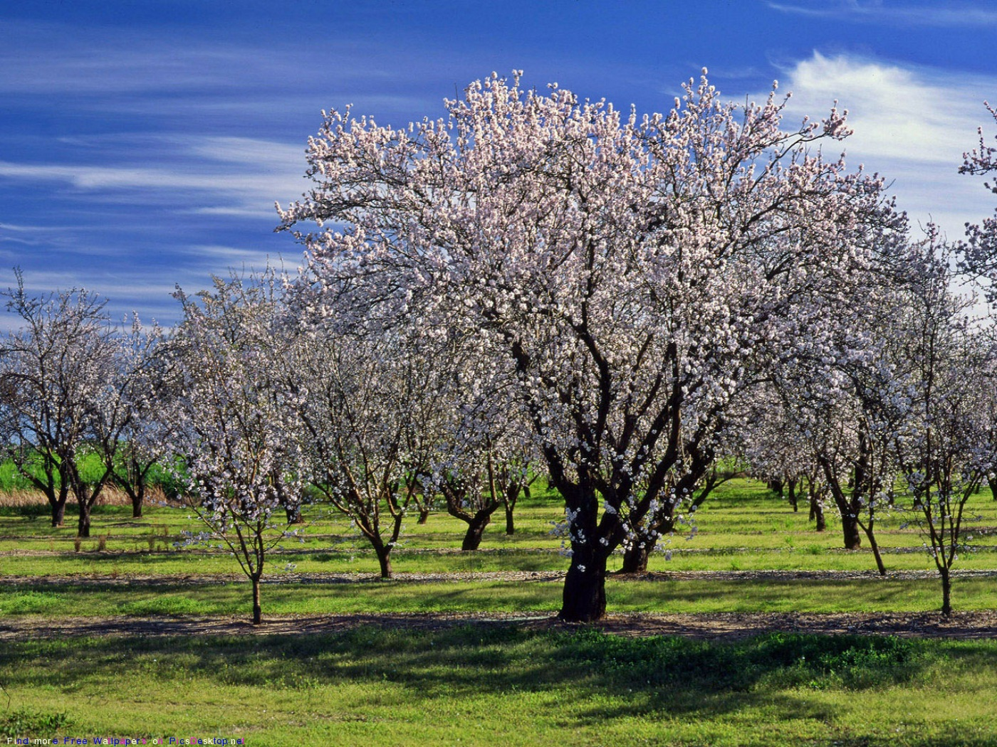 Весна - Красивые Бесплатные фото обои ...: picsdesktop.net/Springtime/1400x1050_PicsDesktop.net_140.jpg.htm