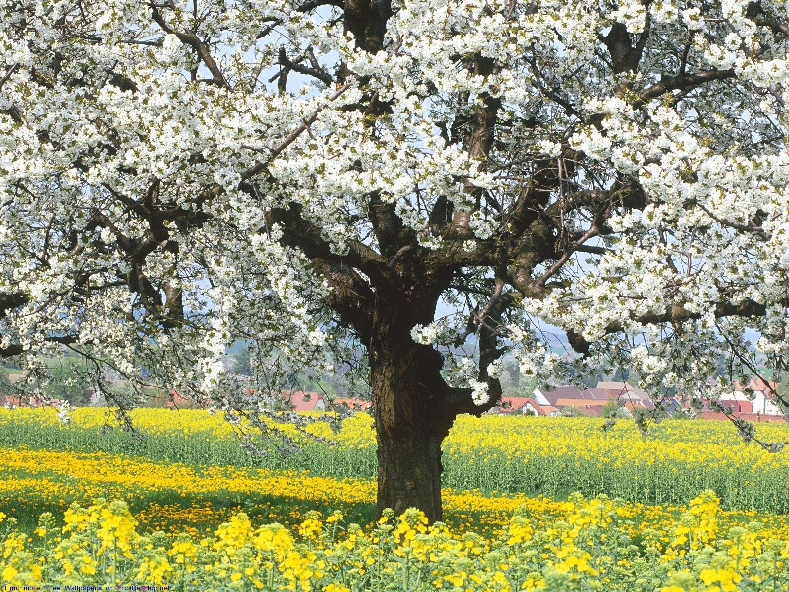 Фото обои рабочего стола весна