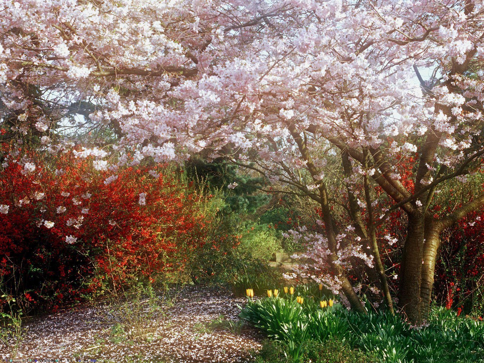 Весна - Красивые Бесплатные фото обои ...: picsdesktop.net/Springtime/1600x1200_PicsDesktop.net_94.jpg.htm