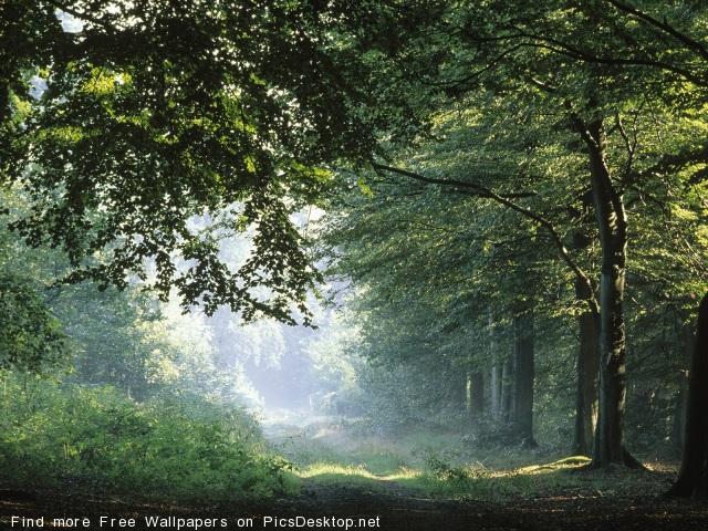 http://picsdesktop.net/Springtime/640x480/PicsDesktop.net_100.jpg