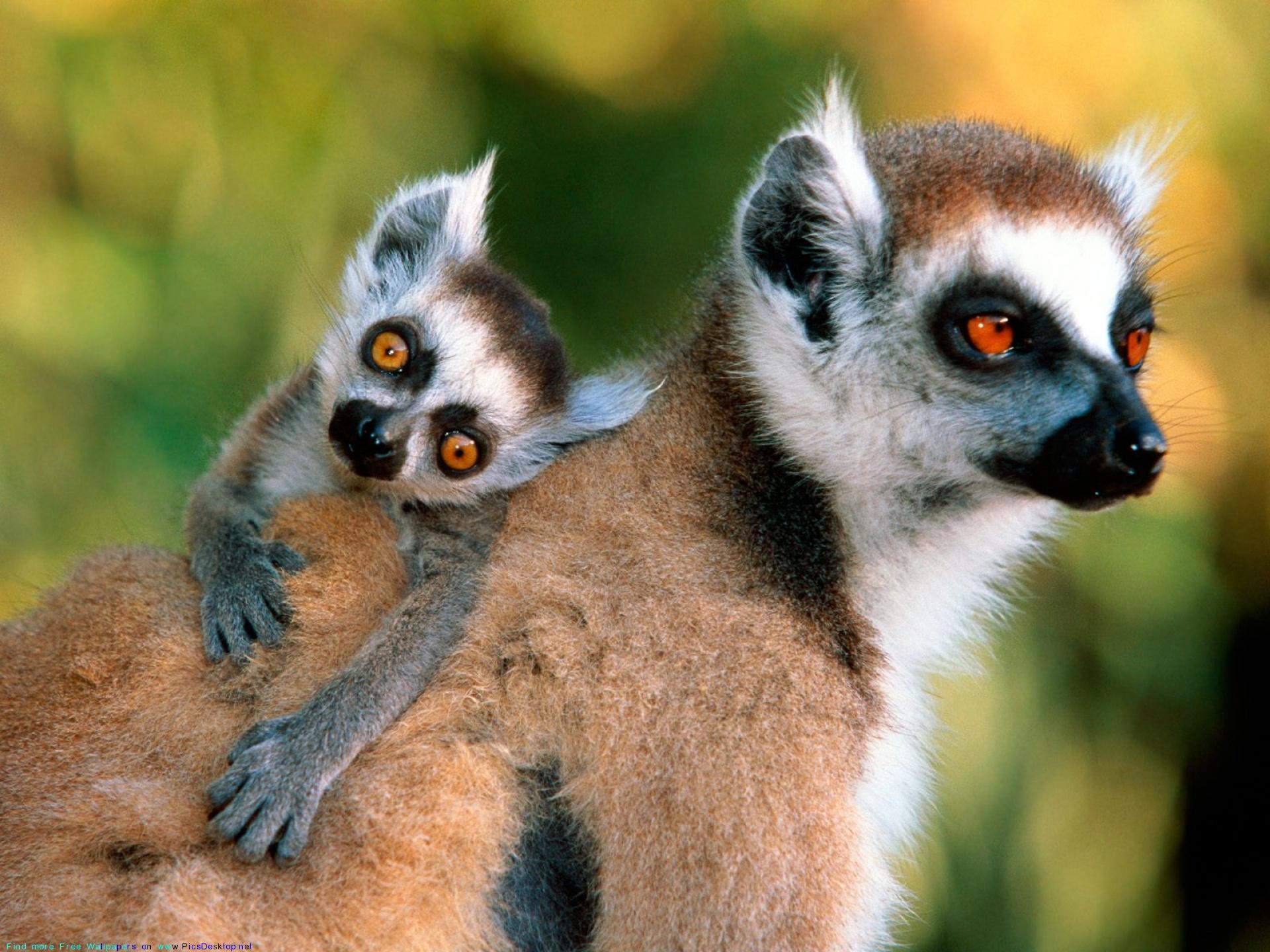 Глядя на эти фото, понимаешь, что животные любят своих детенышей