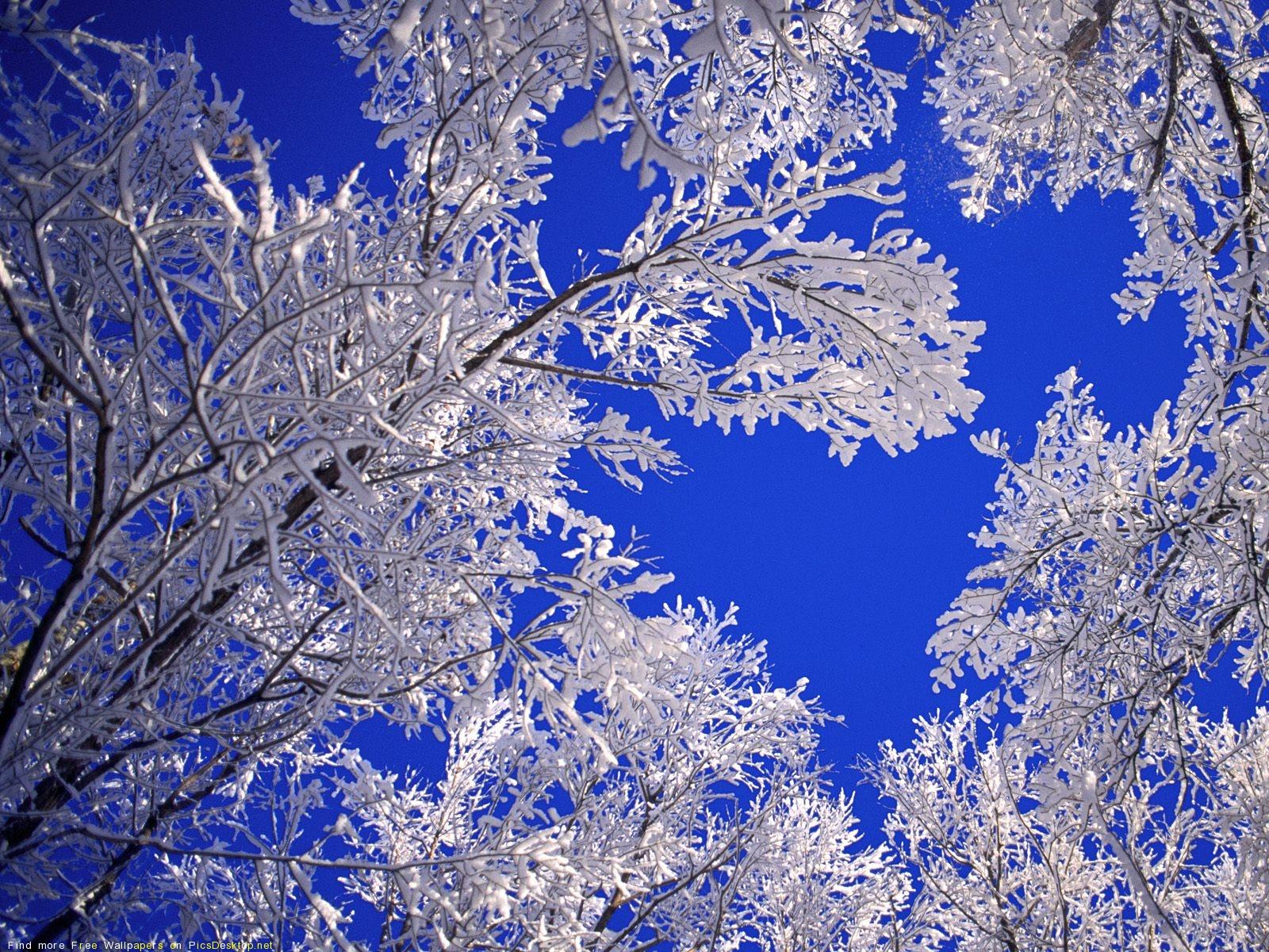 Живые картинки для рабочего стола природа зима