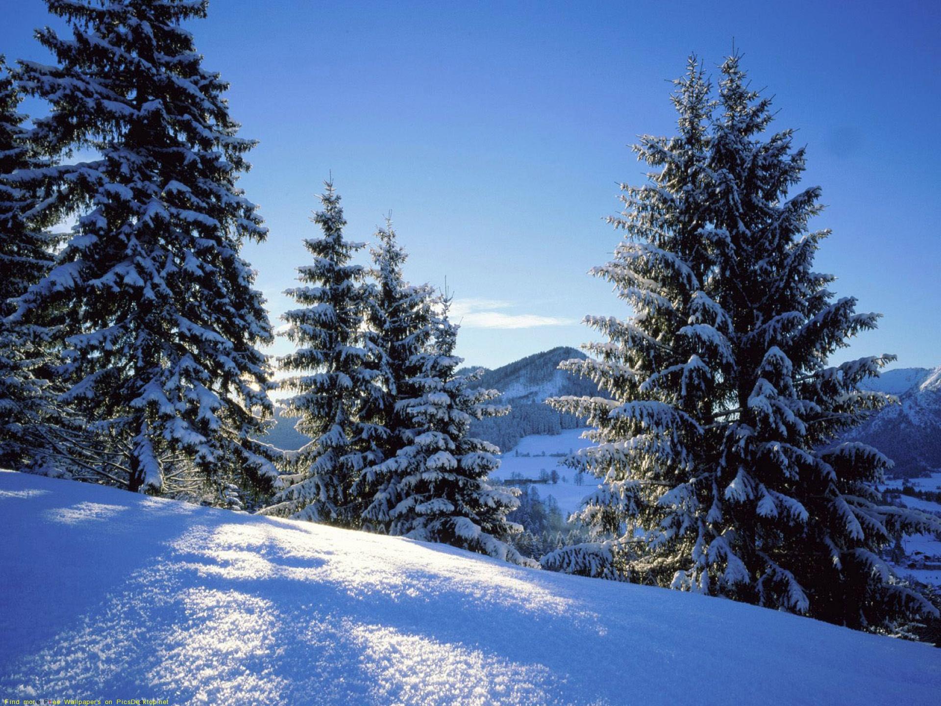 Зимова природа картинки 4