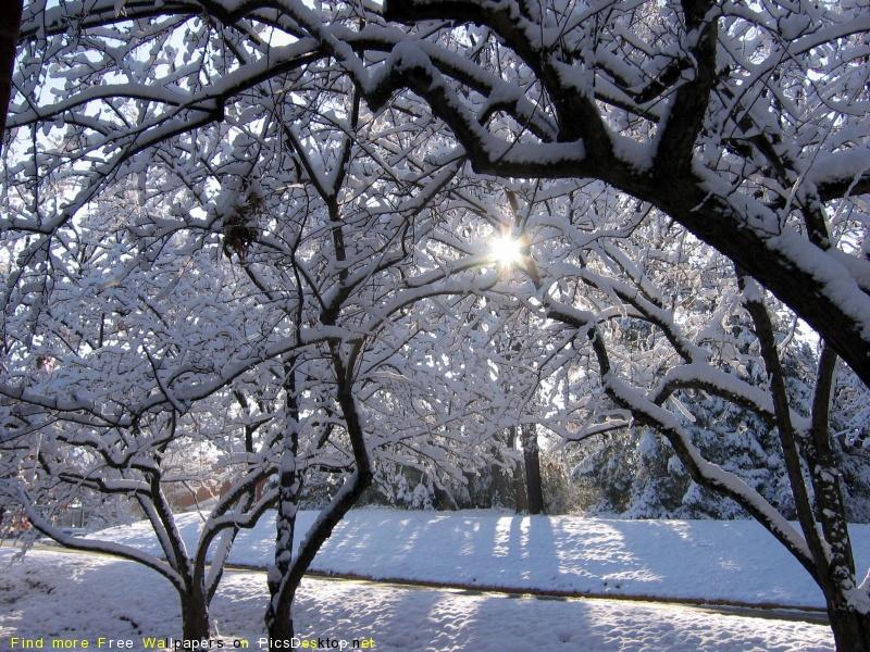 http://picsdesktop.net/Winter/800x600/PicsDesktop.net_121.jpg