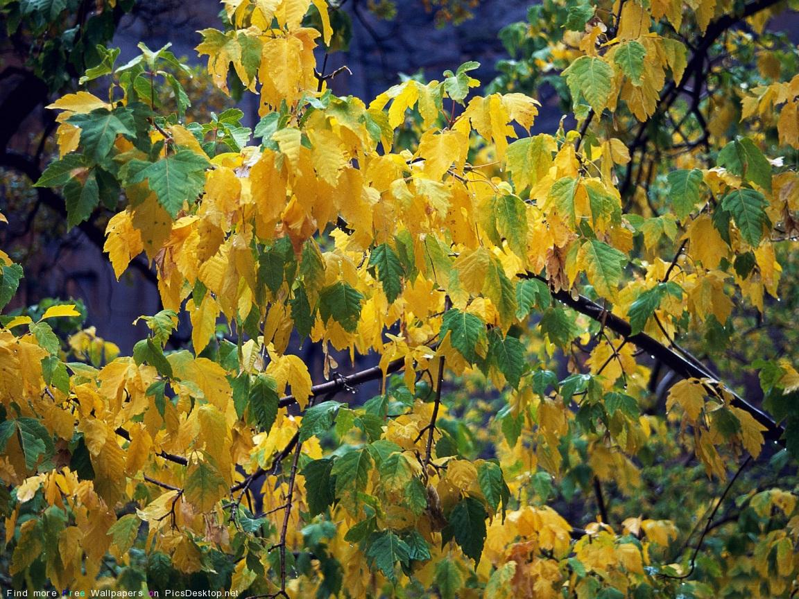 Природа осень красивые фото обои для