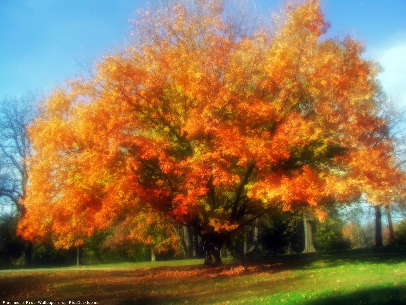 обои для рабочего стола осень красивые фото 194
