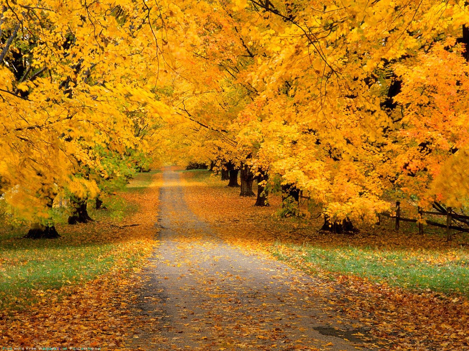 Картинки На Рабочий Стол Природа Осенью