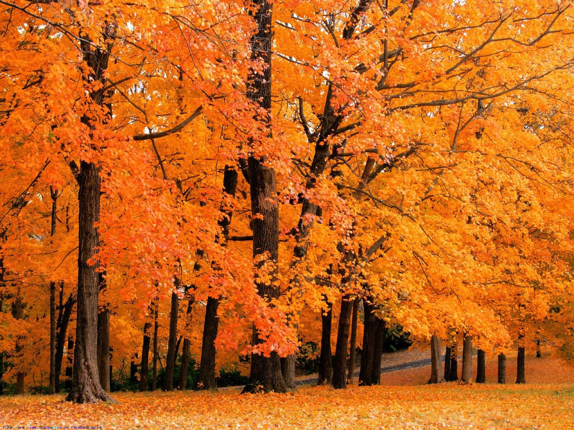 Краски Осени.