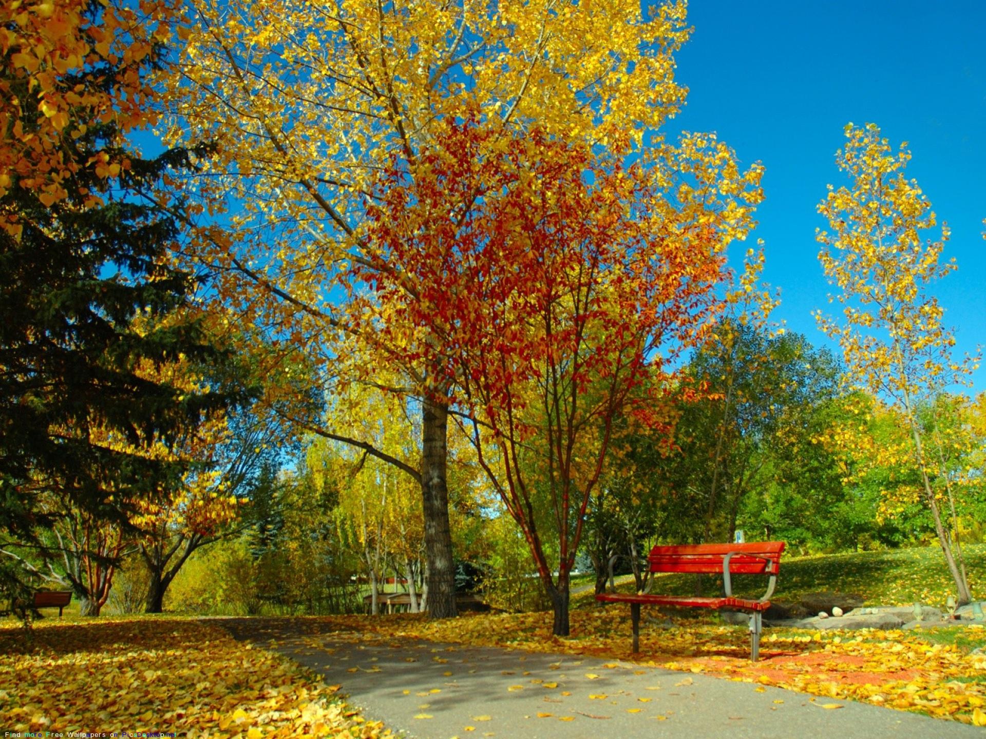 Картинки о природе красивые осенью