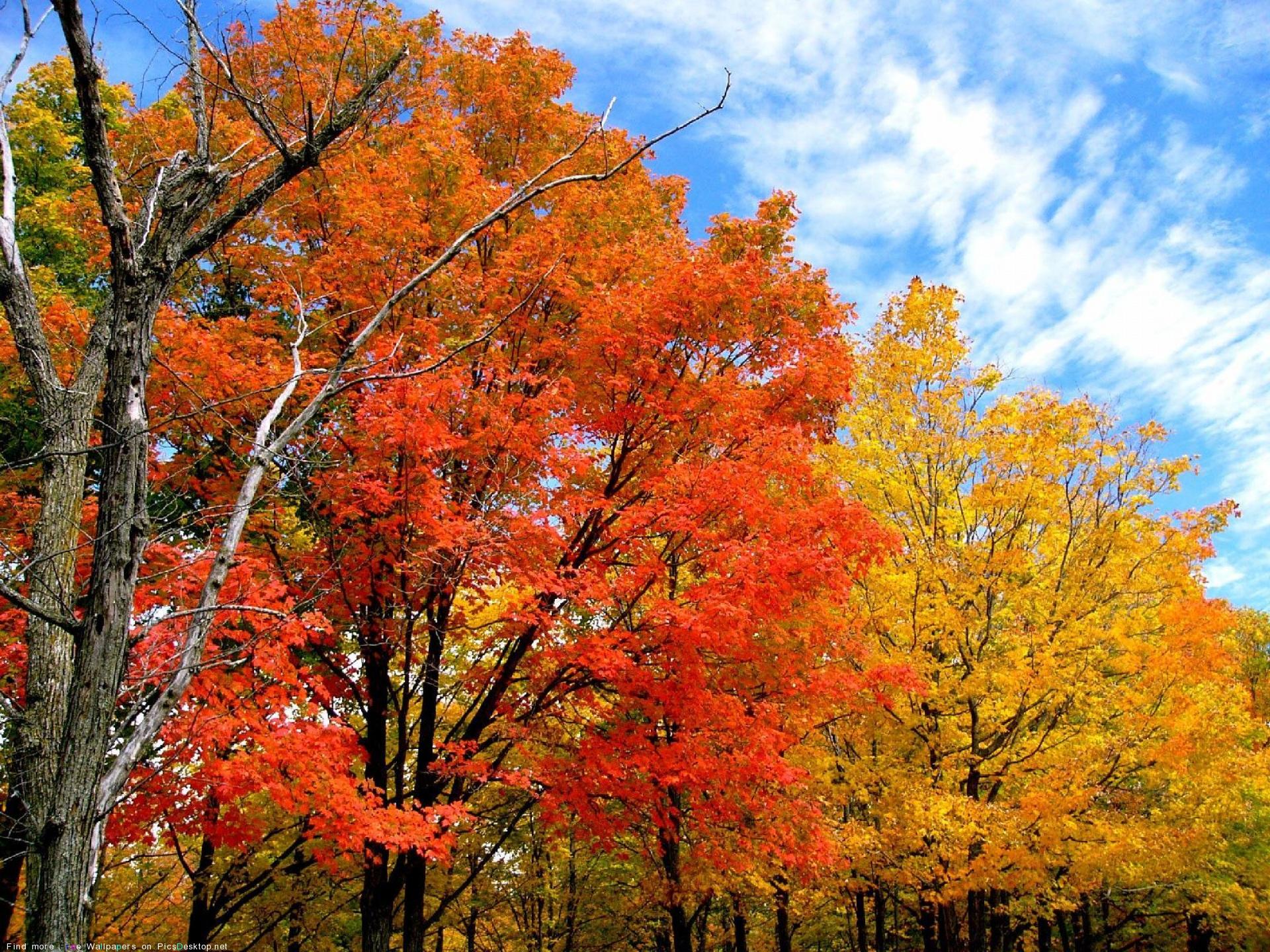 День святого Луки. И волчицею рыжая осень по опушке летит. Но