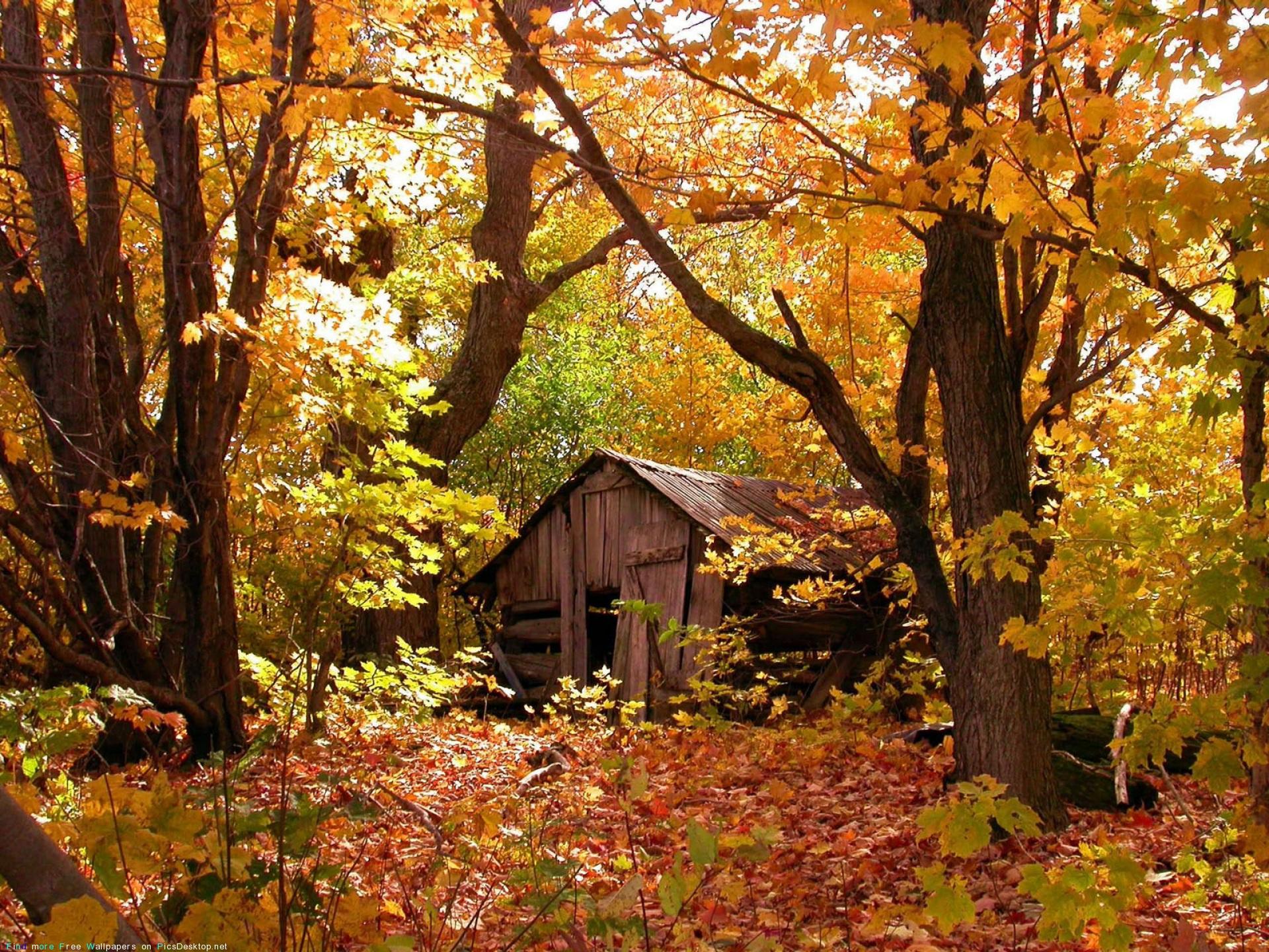 Заброшенный дом, лес, осень, природа 1600х1200 - Обои для рабочего
