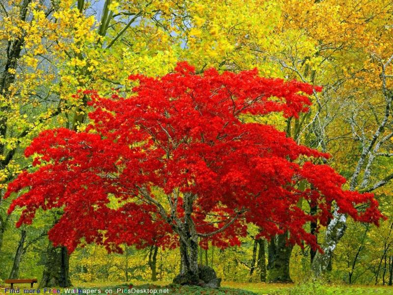 Nature Wallpapers Collection - В кадре: деревья.