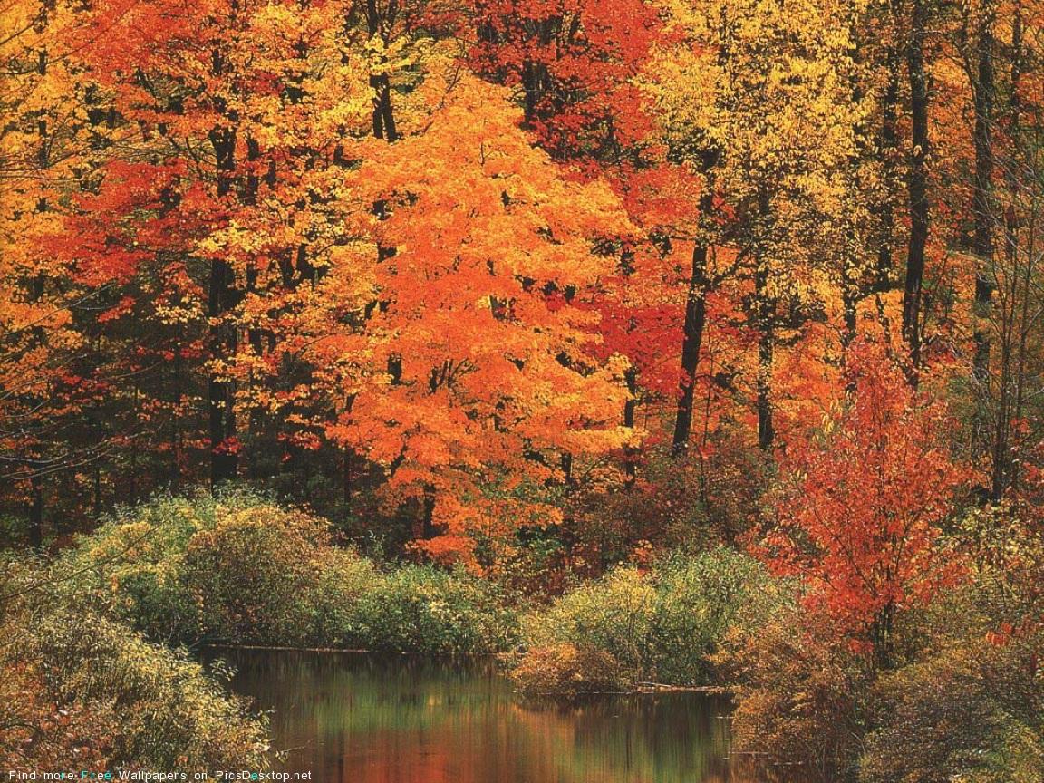 http://picsdesktop.net/forest/1152x864/PicsDesktop.net_537.jpg