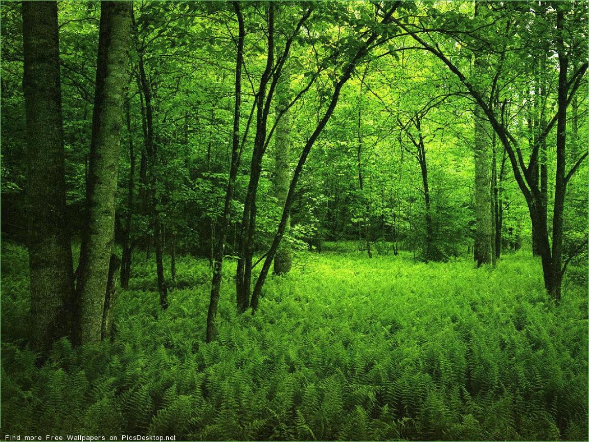 Лес деревья зелень фото обои для