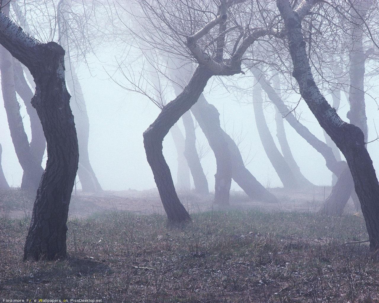 Прохожую в лесу 25 фотография