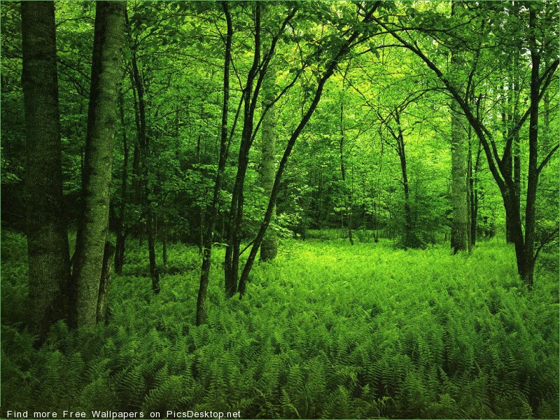 Лес, деревья, зелень - фото обои для рабочего стола ...: http://picsdesktop.net/forest/800x600_PicsDesktop.net_9.jpg.htm