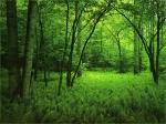 Лес, деревья, зелень - фото обои для рабочего стола компьютера