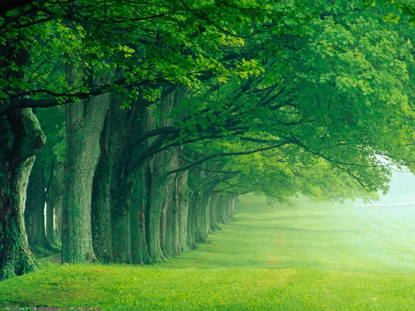 обои для рабочего стола природа лето лес широкоформатные